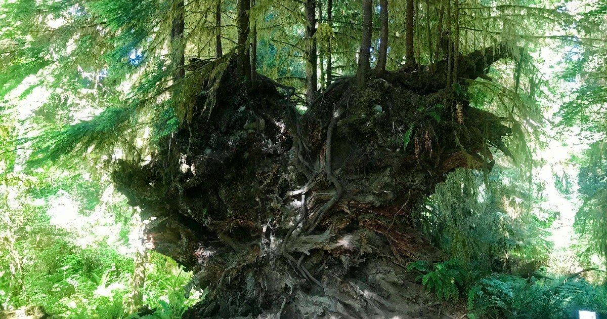 A Spiritual Walk in the Woods